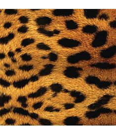 Leopard Imitation Sign Vinyl